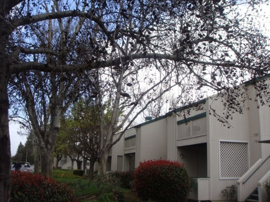 Macara Gardens Apartments rental