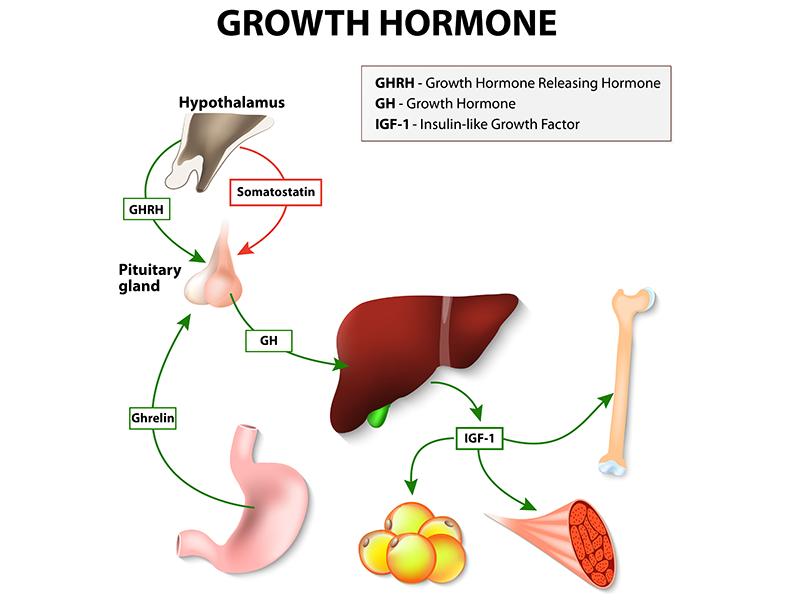 growth hormone path renue health