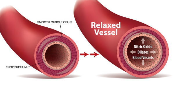 Enhancing Your Endothelial Nitric Oxide | Sexual Enhancement