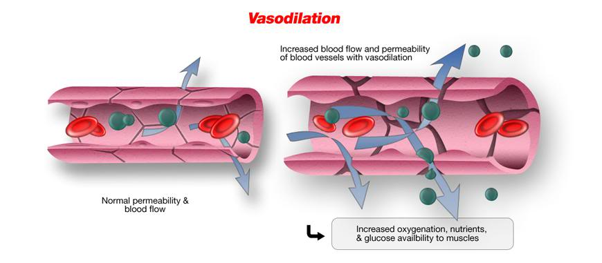 vasodilation blood flow