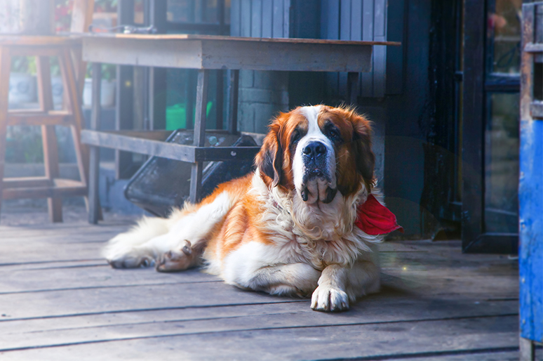Will Your Dog Protect Your Home