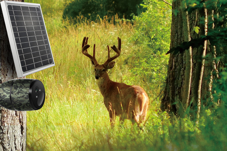 Solar Panels for Security Cameras