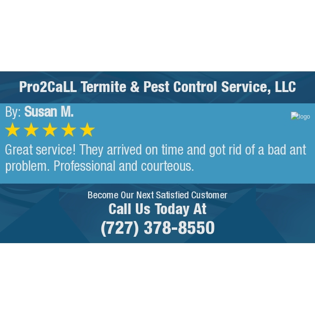 Great Service They Arrived On Time And Got Rid Of A Bad Ant Problem Professional And Termite Pest Control Pest Control