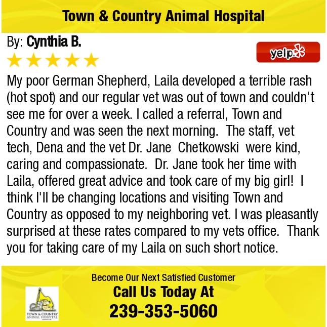 My Poor German Shepherd Laila Developed A Terrible Rash Hot Spot And Our Regular Vet Hot Spot Animal Hospital German Shepherd