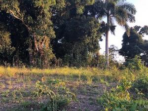 Bo. Guaraguao Abajo