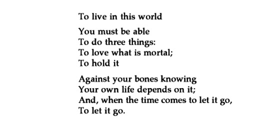 mary oliver in blackwater woods