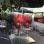 Ceviche & Pisco