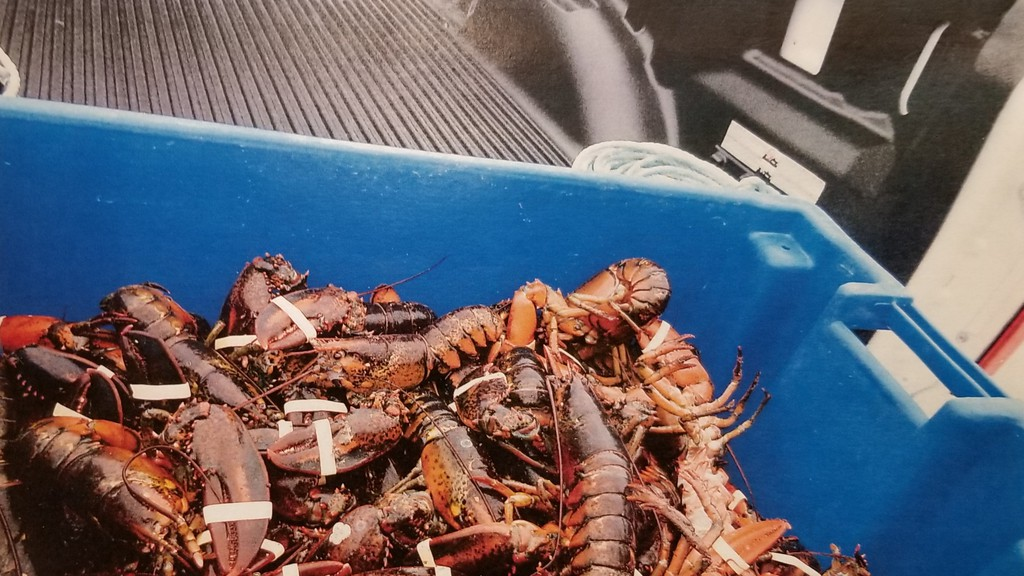 Scott Patterson was caught with 49 lobsters all under the legal size-limit in June 2019. Officers, though, couldn't prove how exactly Patterson, who is a clam digger not a lobster fisherman, got the creatures.