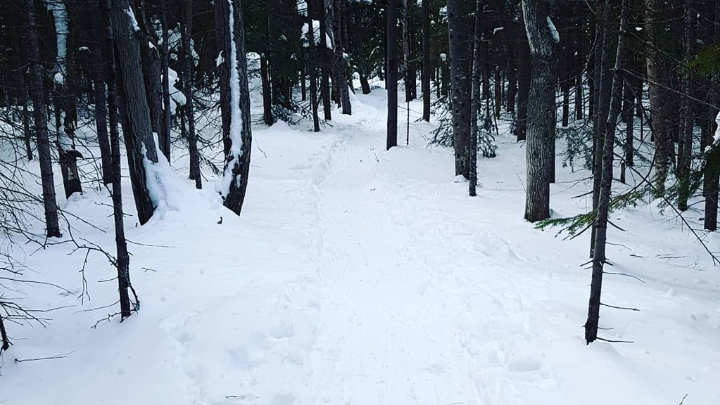 A snowshoe trail through the woods at the north side of Dalhousie Mountain. Those who would like to go snowshoeing during the March Break can use their library cards to sign out snowshoes and poles from the Campbellton Regional Library. There are other events going on during March Break in the area so people can get outside and do something.