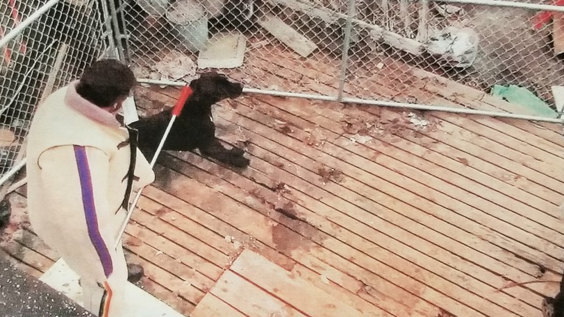 A still image taken from a video recorded when Michael Kirby's dogs were seized from his home in 2018.
