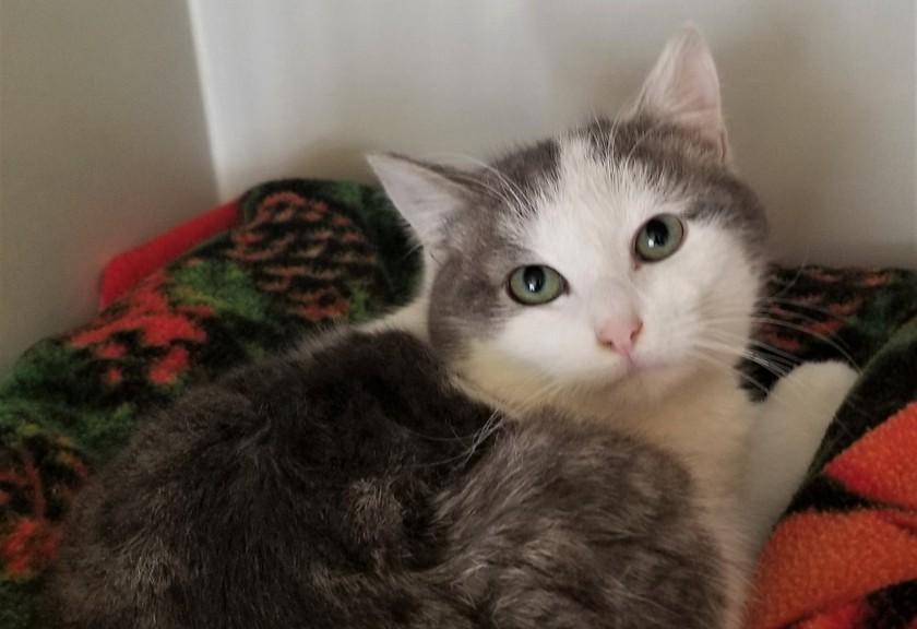 MJ is one of the cats available for adoption from the Victoria County SPCA animal shelter in Arthurette. The shelter has re-opened now the risk of flooding from the spring freshet has passed.
