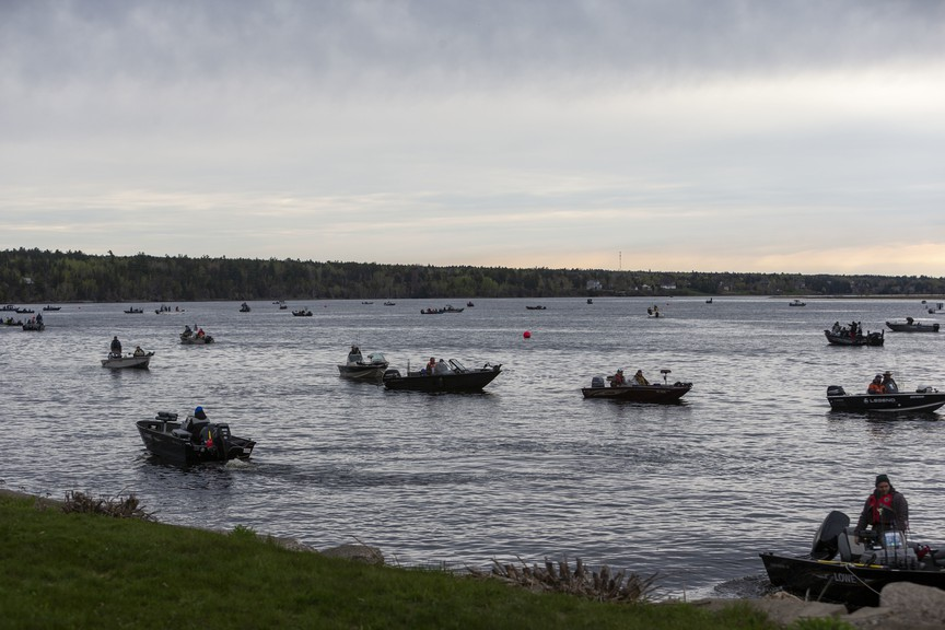 The Miramichi Striper Cup will return next month after a one-year hiatus, with a new virtual format available for individual anglers.