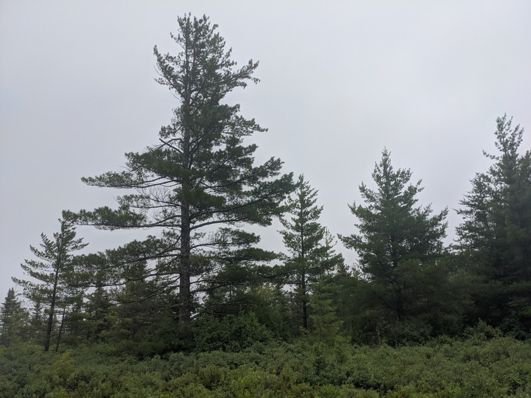 The Nature Conservancy of Canada was gifted 11.5 hectares (28 acres) of forest and peat bog in Malpec, a rural area outside Neguac, from Ivan Savoy. The donation was made in memory of Savoy's parents.
