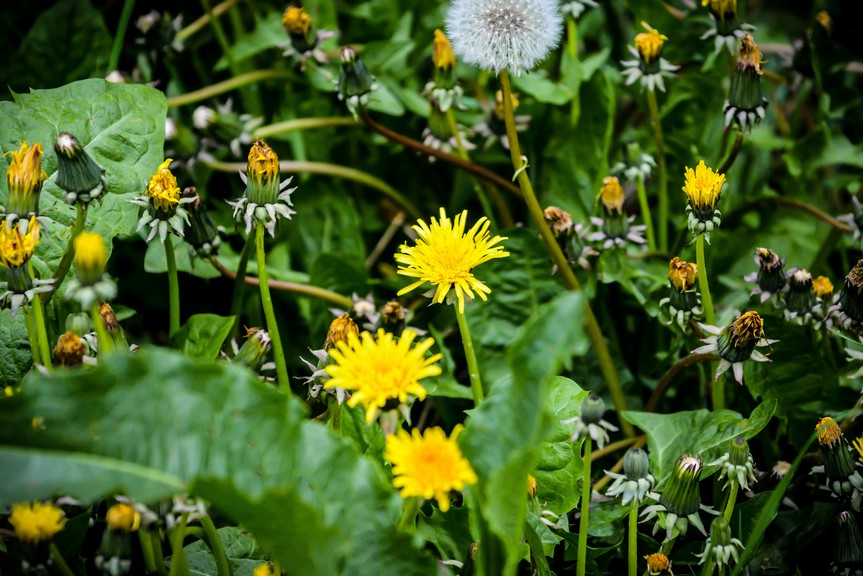 Coun. Samuel Daigle proposed the city participate in No-Mow May, an initiative to let lawns grow to support pollinators.