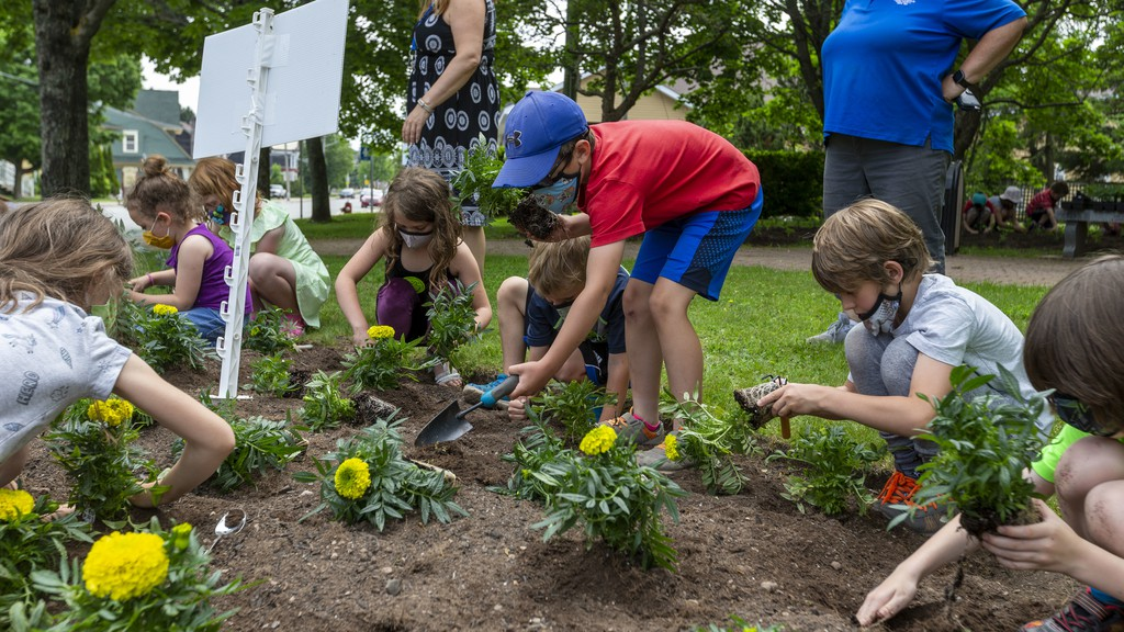 Grade 1 students from Sussex Elementary School plant marigolds Wednesday morning at Peace Park.