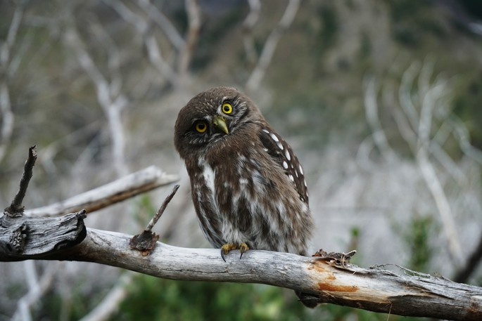 The Belleisle Watershed Coalition is inviting residents out to an owl prowl Thursday night starting at 8:30 p.m. at the trail head near Hatfield Point Cemetery.