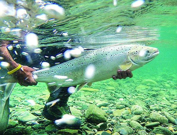 Recreational angling for all species across the Miramichi River system has been reduced to 6 to 11 a.m. daily by Fisheries and Oceans Canada due to warm water temperatures.