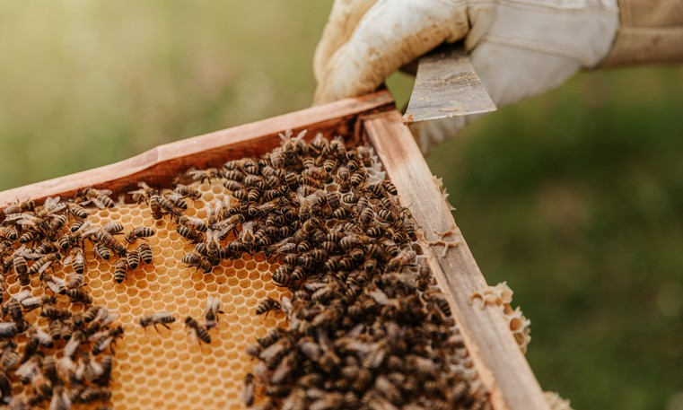 """The Town of Quispamsis will look at amending its zoning bylaw to regulate beekeepingoperations in the municipality after receiving a complaint from residents in the spring about excessive amounts of """"bee poop"""" littering their property."""