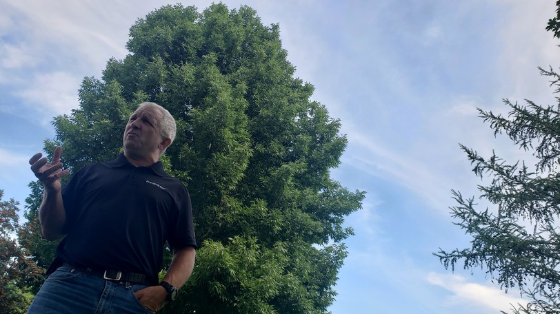 Fredericton Forester Mike Glynn in front of an inoculated ash tree in Wilmot Park on Friday. Fredericton will spend millions of dollars fighting the emerald ash borer beetle over the next 10 years.