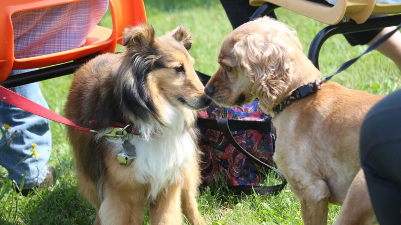 Dinah, left, and Buddy, right, say hello to each other during the Blessing of the Animals service in Hartland on Saturday, Aug.21.