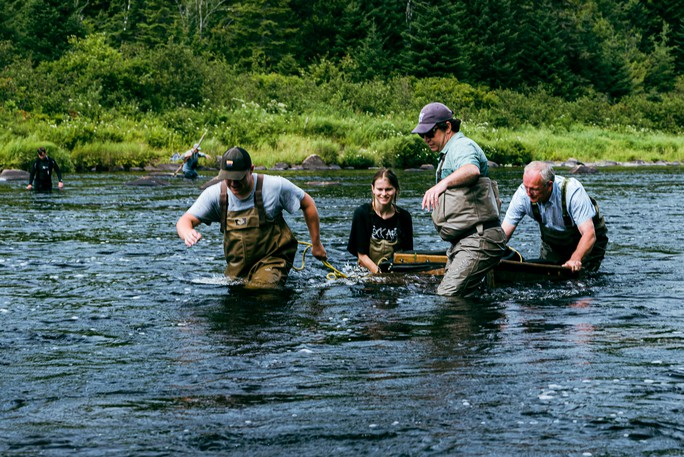 Crew members from the Atlantic Salmon Federation, Miramichi Salmon Association and the Canadian Rivers Institute remove non-target species from the treatment area on the Southwest Miramichi River and move them to safety before the planned piscicide treatment, which was delayed after Indigenous opponents took to Miramichi Lake Aug. 17.