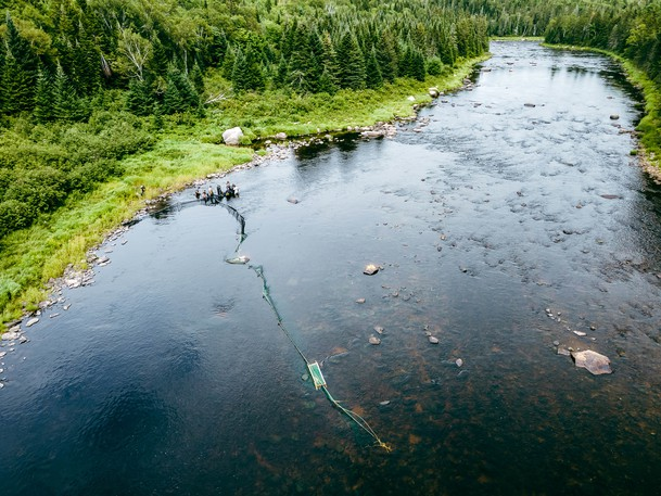 On Aug. 9, members of the Working Group on Smallmouth Bass Eradication in the Miramichi conduct at fish rescue at Tent Pool on the Southwest Miramichi River. Over three days, nearly 90 adult salmon were collected from the project area and moved behind a fish migration barrier several kilometres downstream, one of the major mitigations built into the project to stop invasive smallmouth bass from colonizing the Miramichi watershed.