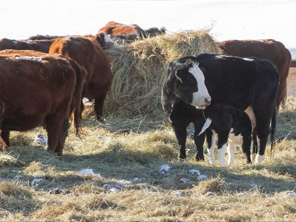 The federal government is warning Canadians not to use a livestock deworming drugas a COVID-19 vaccine replacement.