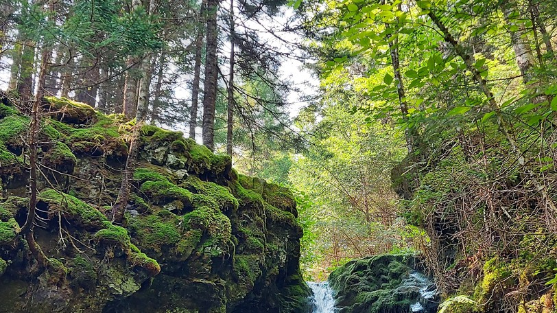 The Nashwaak Watershed Association hopes to convince private woodlot owners to recreate mature Acadian forests, such as this one at Dickson Falls in Fundy National Park.