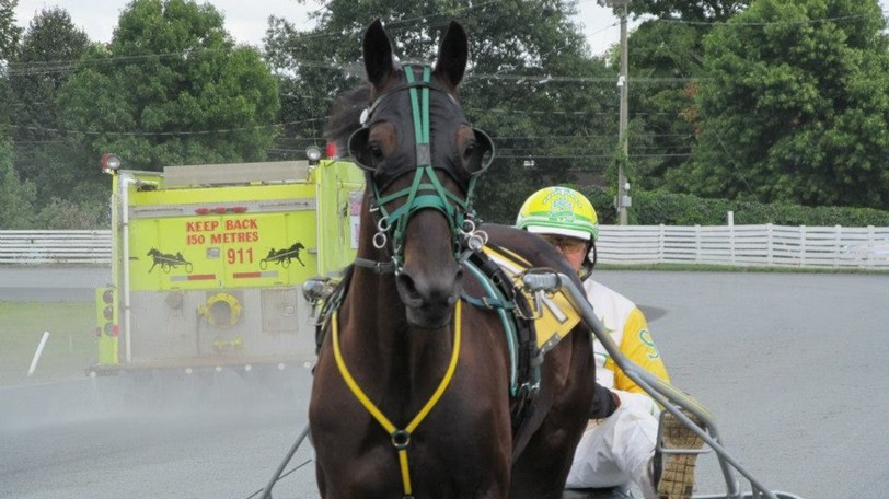 Untouchable One, now 11, was bred by Cheryl Geldart on her farm in Kings County. The Standardbred horse went on to set track records across the Maritimes, winning back-to-back Atlantic Breeders Crowns, before he ended up in a slaughter pen before he was rescued.