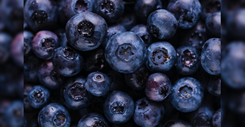 """New Brunswick is""""moving forward with a plan to enhance land use"""" which includes wild blueberry development on or nearthe military's former Tracadie Range."""