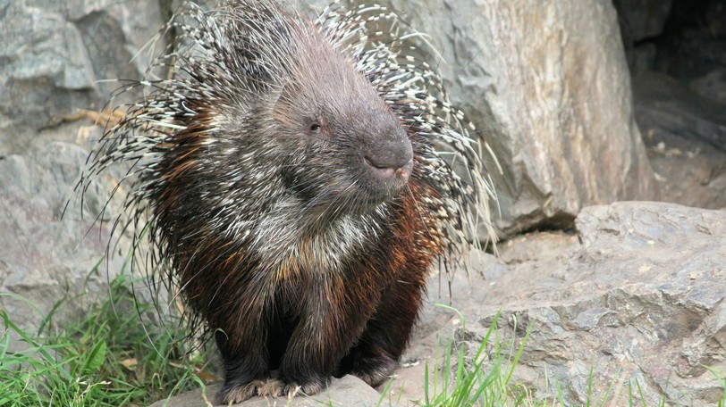 Bill Clarke says this week his New Porcupine Party has a lot to offer voters.