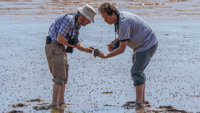 Environmentalist David Christie, left, is seen wading into the Bay of Fundy mud with Jonathan White, author of the 2017 book Tides: The Science and Spirit of the Ocean. Christie will receive the Order of New Brunswick for his dedication to the study and protection of New Brunswick's environment.