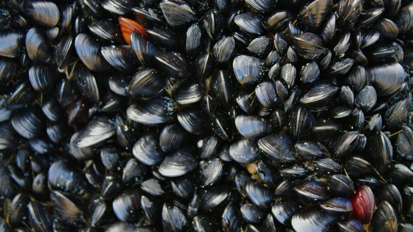 The DFO says there are consequences to harvesting shellfish from closed areas, and what's more, it is potentially dangerous to public health to eat shellfish from close areas as they are likely contaminated.