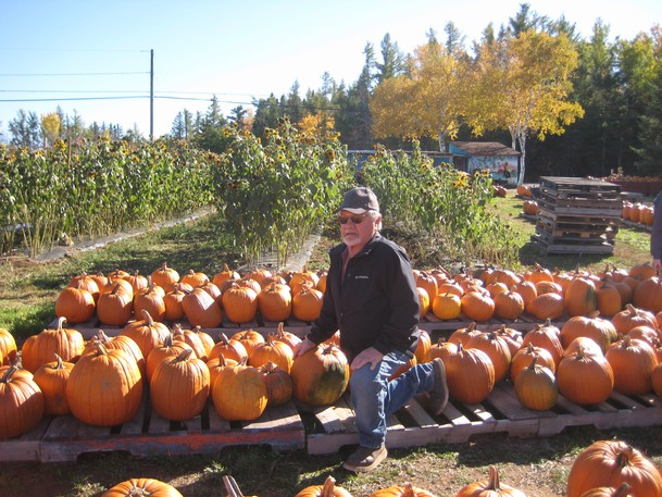 Ralph Lockerbie, owner of Lockerbie's Vegetable Stand, is shown among the pumpkins from a previous sale in support of the Miramichi Regional Hospital Foundation. This year's sale is Oct. 9 and 10 from 9 a.m. to 6 p.m. at the Wellington Street stand in Loggieville.