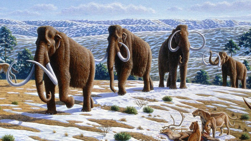 An illustration of a family of Woolly Mammoths as winter approaches in this ice age scene.