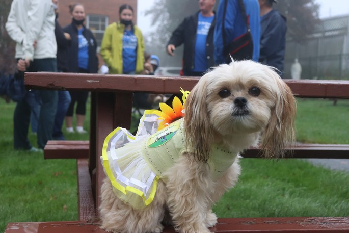 Charlie the therapy dog from Saint John Ambulance made a guest appearance at the Memorial Walk.