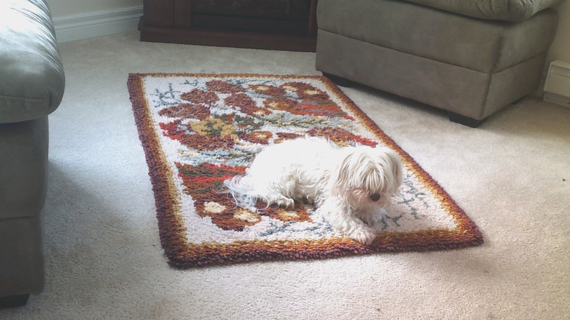 Columnist Carla MacInnis Rockwell's dog Miss Lexie suns herself on a conveniently placed rug.