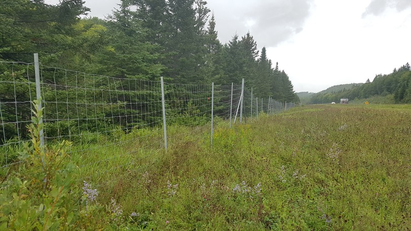 Wildlife fencing west of Campbellton on Route 11. Yves Goudreau of Dundee has started a petition for wildlife fencing from Campbellton to Belledune after a motorcyclist was killed in a collision with a moose on the highway in Charlo on Aug. 30. The Restigouche Regional Service Commission has agreed to support the petition.