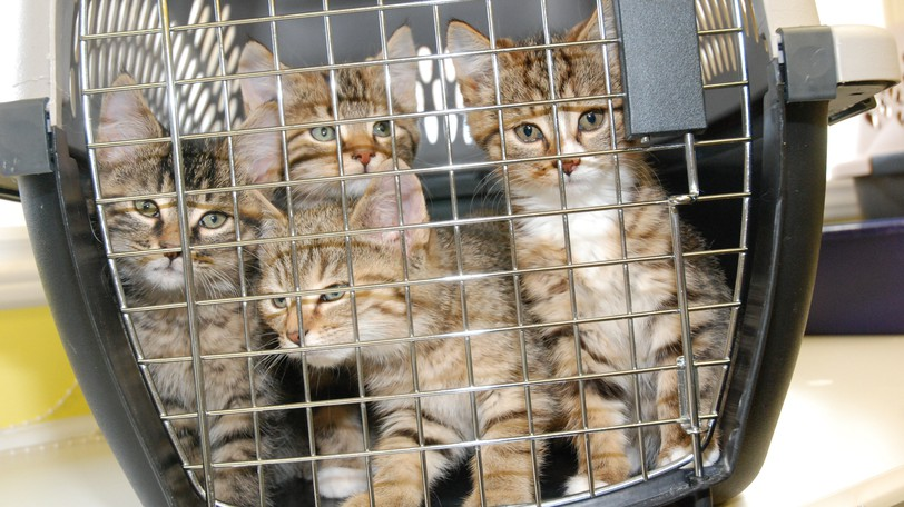 Kittens at the Restigouche County SPCA shelter in Dalhousie. The SPCA will be holding a fundraising yard sale at the shelter on Saturday, Oct.2, in the shelter parking lot from 9 a.m. to2 p.m. (Rain date Oct. 3.)