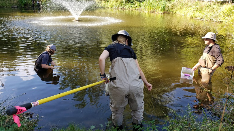 Biologists net goldfish and other invasive species at Odell Park's pond Thursday.