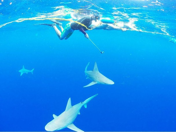 One Ocean Diving and Research takes tourists to snorkel and free dive with sharks off the North Shore of the Hawaiian island of Oahu.