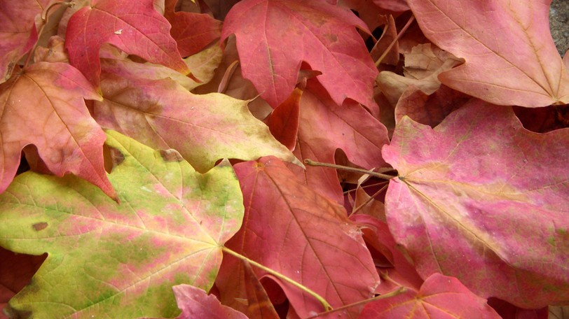 """An environmental group is asking us to keep our rakes in the shed this fall and """"leave the leaves"""" on the ground."""