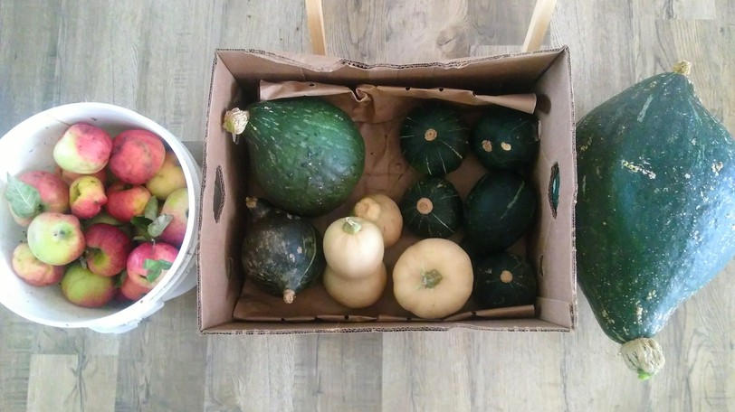 Some of the fall harvest collected by Brigitte Rivers.