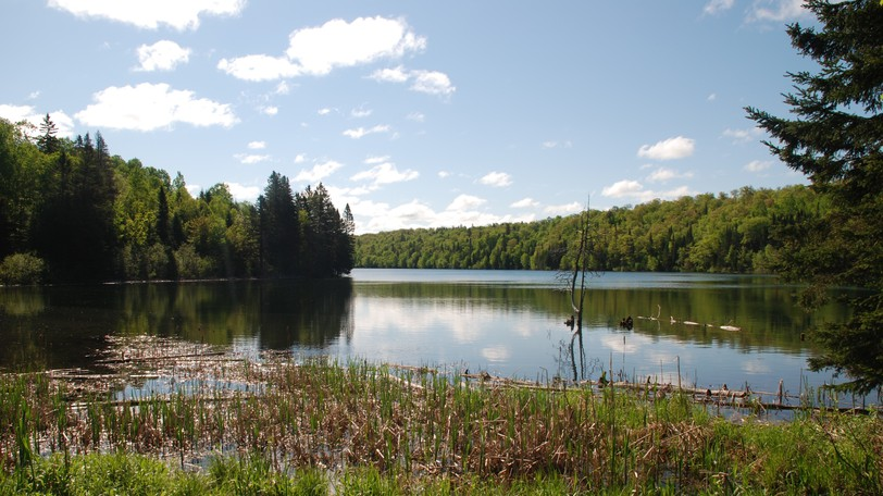 """The area around Prichard Lake in Sugarloaf Provincial Park was once all farmland, but has since been """"rewilded"""" and is largely back to its natural state. David Suzuki says this """"rewilding"""" is happening in many parts of the world."""