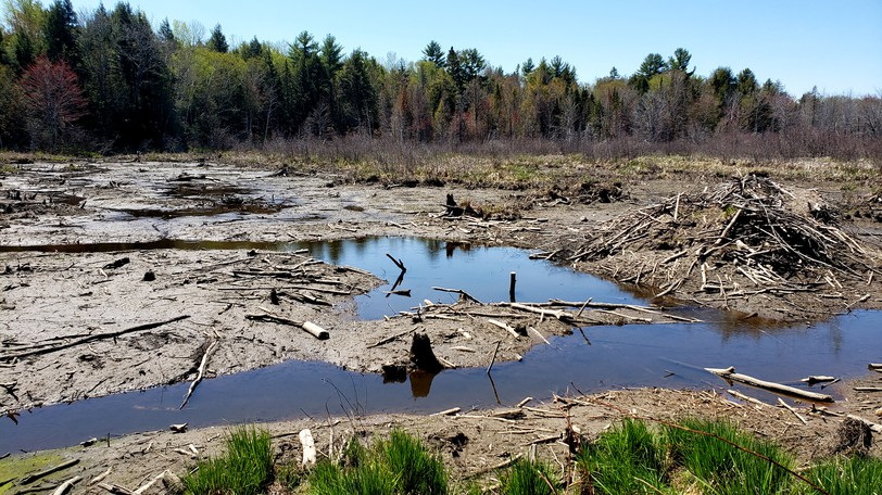 The Ferris Street Forest and Wetland Nature Preserve on Fredericton's north side was accidentally drained in May.