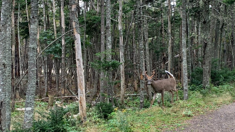 The city's Nuisance Deer Management Program runs from Oct. 4 to Nov. 21 this year.