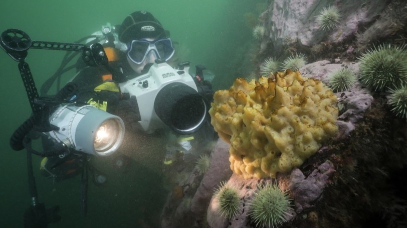 """Goodwin says the best part about her job is being in the water. """"I get to explore underwater, and see new things people haven't seen before,"""" she said, as she's often scuba diving and sampling new habitats."""