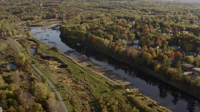 An aerial view of the Marysville Flats in Fredericton shows where trees were planted by scores of volunteers.