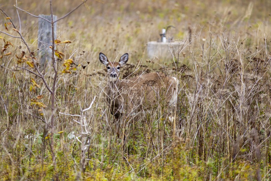 A deer is seen behind the former Telegraph-Journal office near Courtenay Bay and Marsh Creek in Saint John. In his latest column, David Henderson takes a look back at hunting tales from Kings County's History.