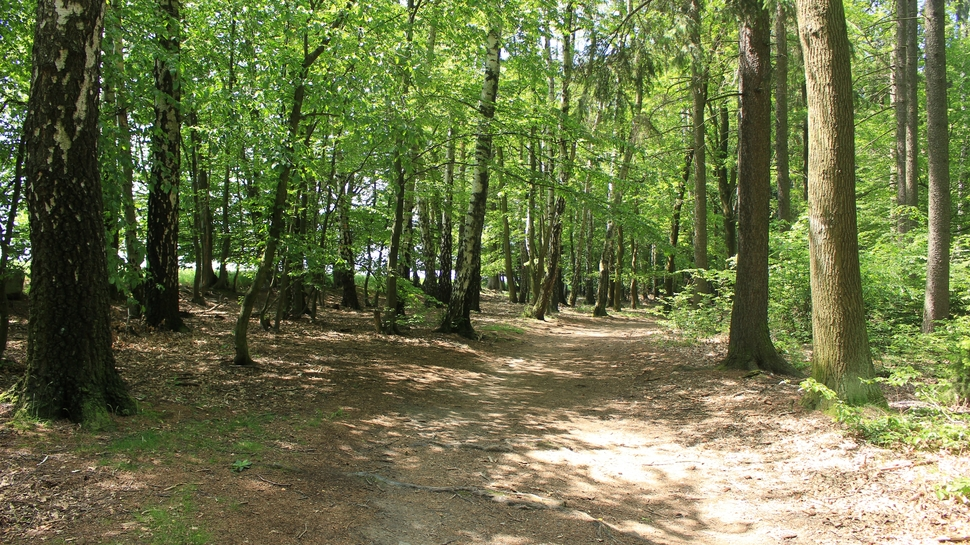 The Sussex Area Trails Association is hosting an information and trail maintenance session this Sunday, starting at 9 a.m. and meeting in Sullivan Park in Sussex Corner.